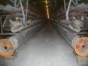 鶏糞の乾燥促進
