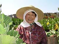 愛媛県東温市でケール栽培を行っておられる木下日出子(ひでこ)さん。2haの畑で丸山農場の発酵鶏糞をお使いいただいております。丸山農場にもよ くお立ち寄りくださいます。